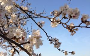 桜も散って
